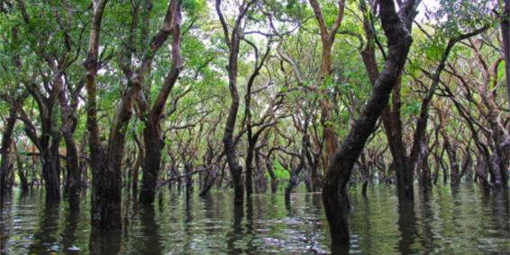 mangrove1200x600