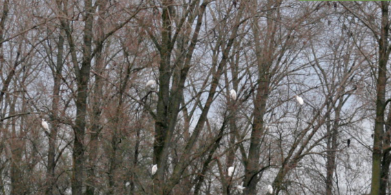Afbeelding-1-Bird-Manure-1200x600
